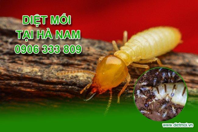 Diet moi tan goc tai Ha Nam