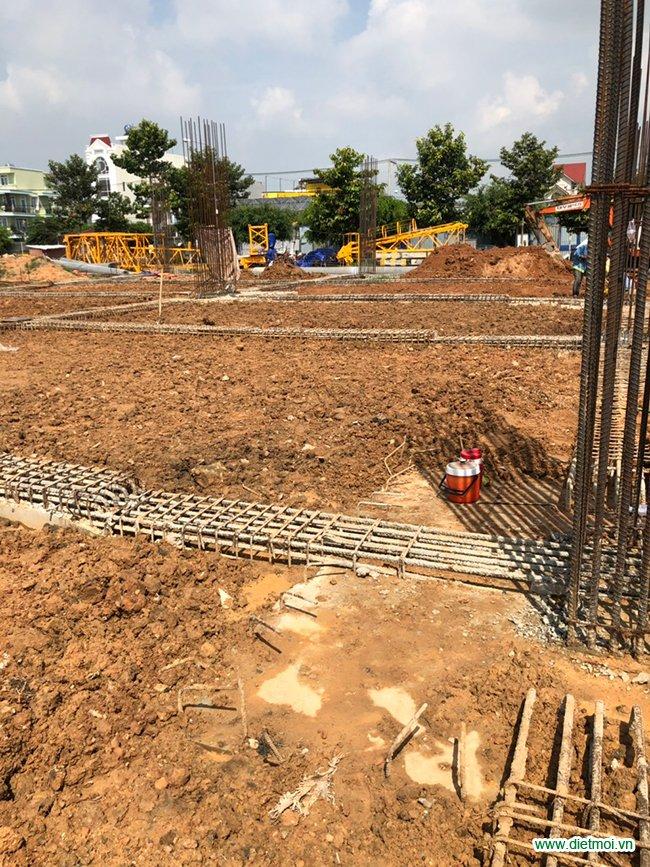 Hình ảnh phòng chống mối cho công trình xây dựng