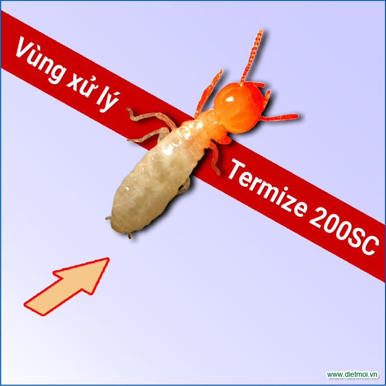 Khí mối đi qua vùng xử lý thuốc diệt mối tận gốc termize 200SC
