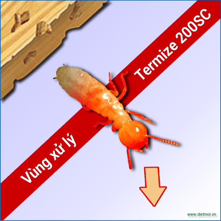 Mối đã nhiểm thuốc diệt mối termize 200SC