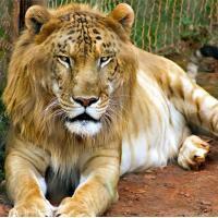10 loài động vật lai đẹp lạ nhất thế giới