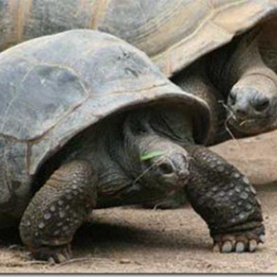 10 loài động vật sống thọ nhất thế giới