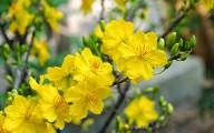 10 loài hoa đẹp cho những ngày tết bính thân 2016