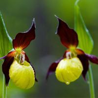 10 loài hoa đẹp và hiếm gặp nhất thế giới
