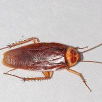 Ảnh:  3 cách diệt côn trùng đơn giản tại nhà