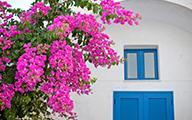 5 loài hoa đẹp dễ trồng nhất Việt Nam