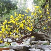 6 loài hoa đẹp nhất cho ngày tết nguyên đán 2018