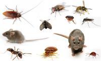 Bảng giá dịch vụ diệt côn trùng diệt muỗi năm 2020 áp dụng toàn quốc