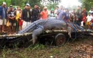 Cá sấu to nhất thế giới