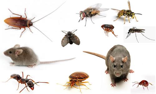 Công ty diệt côn trùng tại Đà Nẵng uy tín giá rẻ