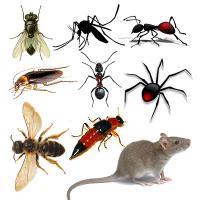 Dịch vụ diệt côn trùng ruồi, muỗi, kiến, gián uy tín tại hà nội