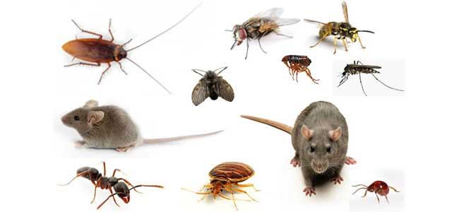 Dịch vụ diệt côn trùng tại TP HCM