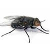 Dịch vụ diệt ruồi tại nhà hiệu quả