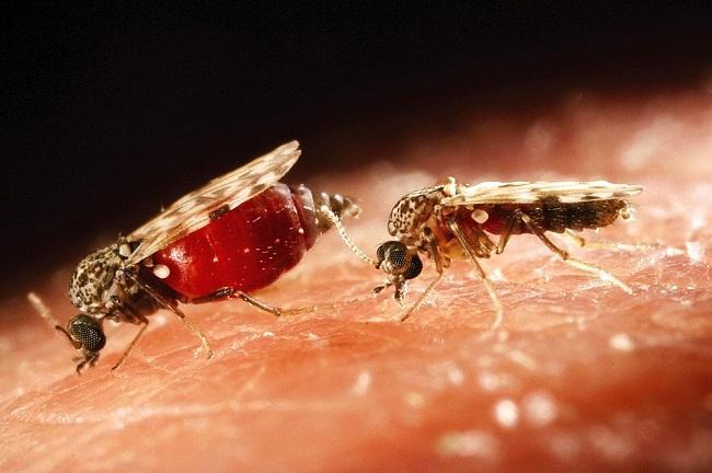 Phun diệt muỗi tại nhà hiệu quả cao