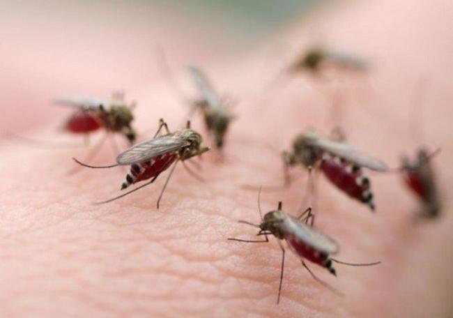 Phun thuốc diệt muỗi hiệu quả cao tại Hà Nội