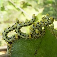 Ảnh:  Top 11 loài côn trùng gây hại mà con người có thể ăn được
